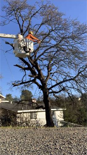 TREE TRIMMING AND REMOVAL/ STUMP GRINDING SERVICE