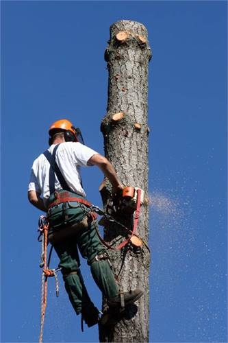 EssentialTree.com 317-748-5085 Affordable Insured Tree Removal